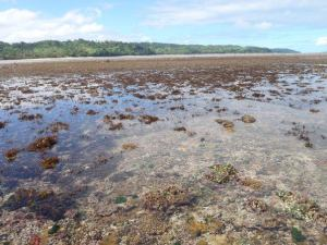 An intertidal coral reef exposed at low tide located in Fiji's Coral Coast.