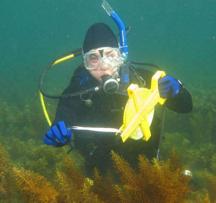 Dalton Koss HQ Partner, Rebecca Koss, doing underwater monitoring and surrounded by the brown seaweed Cystophora subfarcinata.
